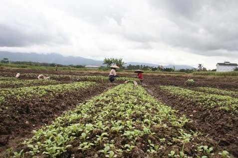 Bogor Mulai Sosialisasikan Asuransi Pertanian