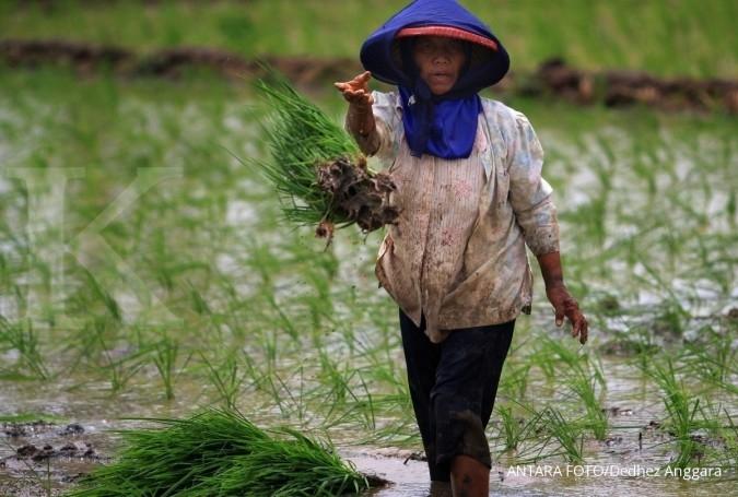 Realisasi asuransi pertanian di 2015 masih rendah
