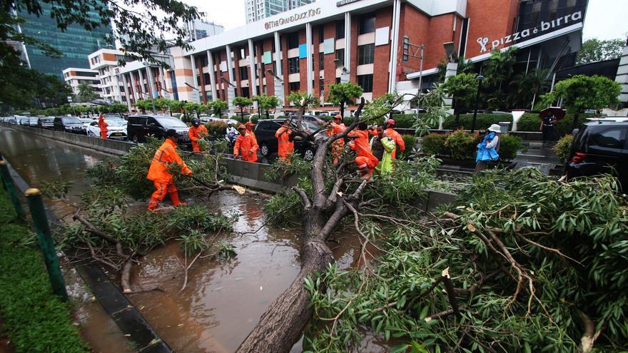 Cara Mengklaim Asuransi Tertimpa Pohon & Kecelakaan di Jalan