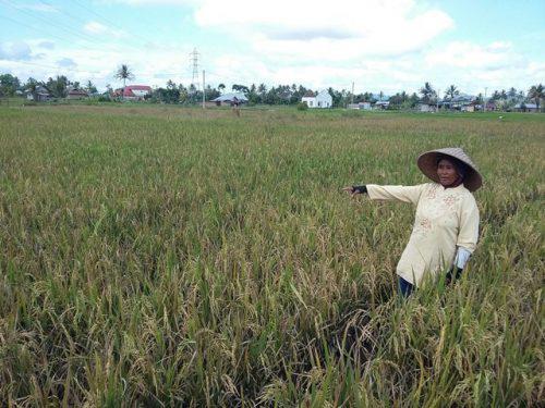 Asuransi Pertanian Mulai Dinikmati