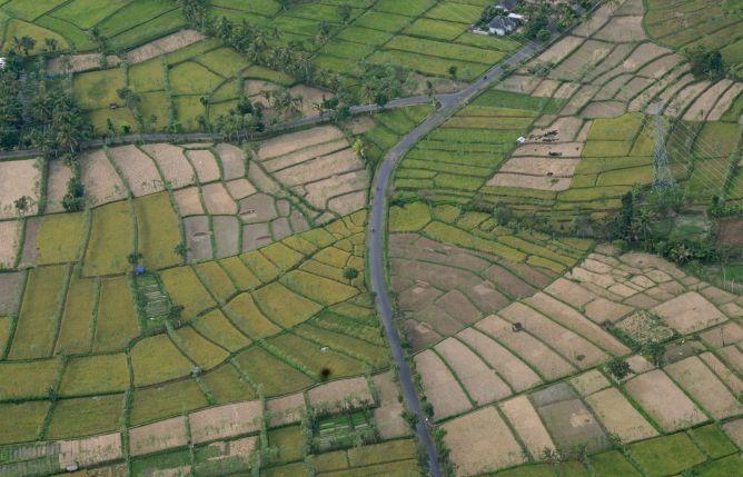 AAUI Minta Tambah Pengelola Asuransi Pertanian