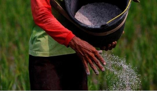 Iklim Berubah, Petani Diimbau Ikut Asuransi Pertanian