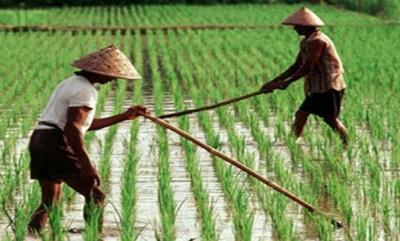 PKS Desak Pemerintah Perbaiki Program Asuransi Pertanian