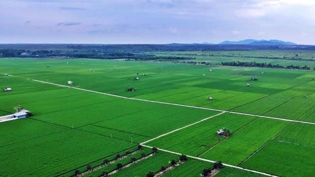 Asuransi berbasis aplikasi SIAP kian diminati petani