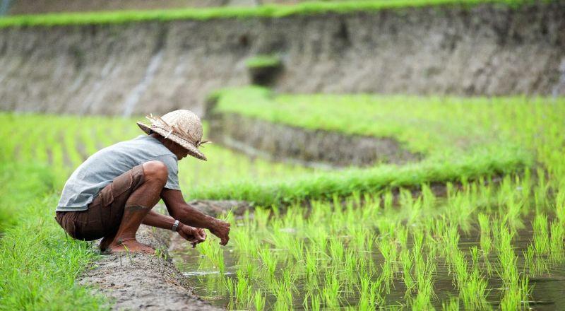 50% Petani Madiun Sudah Ikut Asuransi Pertanian, Sosialisasi Terus Digalakkan
