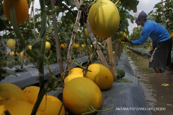 Ini cara kembangkan fintech pertanian menurut AFPI