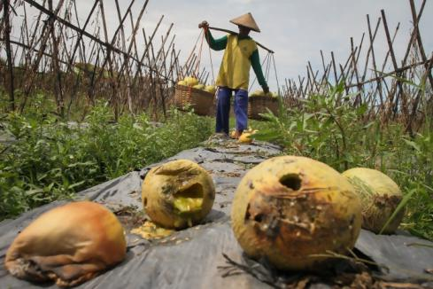 Melindungi petani dengan asuransi (1)