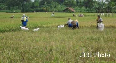 Di Sleman, Asuransi Pertanian Kurang Diminati Petani