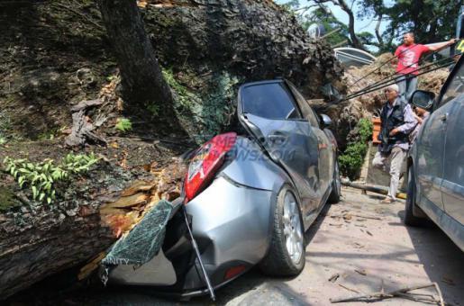 Potensi Hujan Tinggi, Hindari Parkir di Bawah Pohon