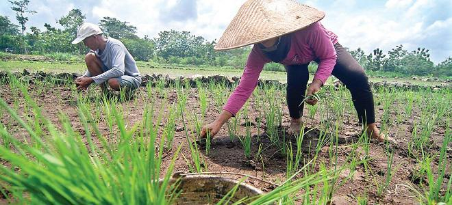 Dorong Pertumbuhan, Genjot Kredit ke Sektor Produktif