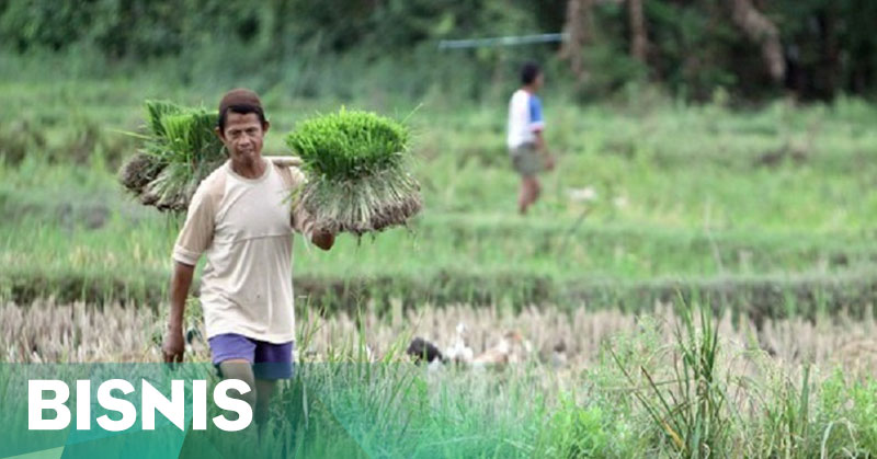 Petani Harus Manfaatkan Asuransi Pertanian