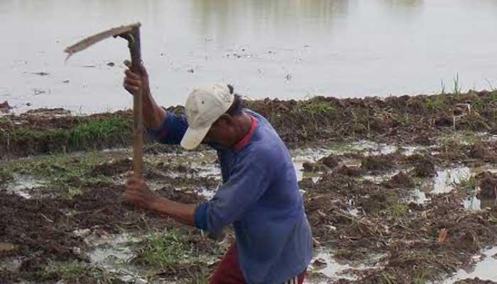 Asuransi Pertanian Atasi Gagal Panen