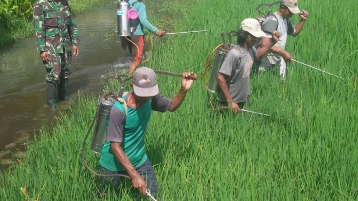 Kalangan Petani di Bantul Masih Enggan Ikut Program Asuransi Pertanian