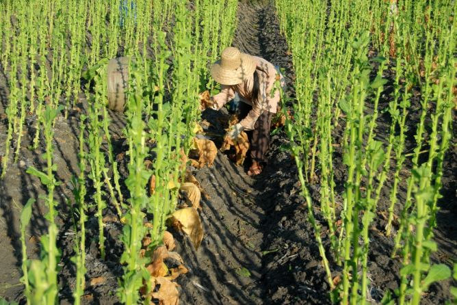 Asuransi Pertanian Terkendala Sosialisasi dengan Petani