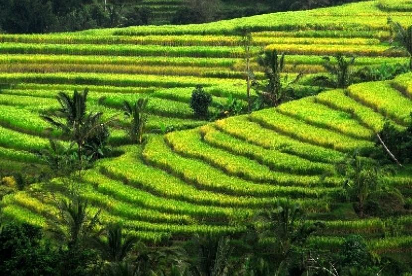 Realisasi Asuransi Tani di Bali Mencapai 55 Persen