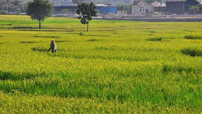 Wampti Dukung Penuh Asuransi bagi Petani